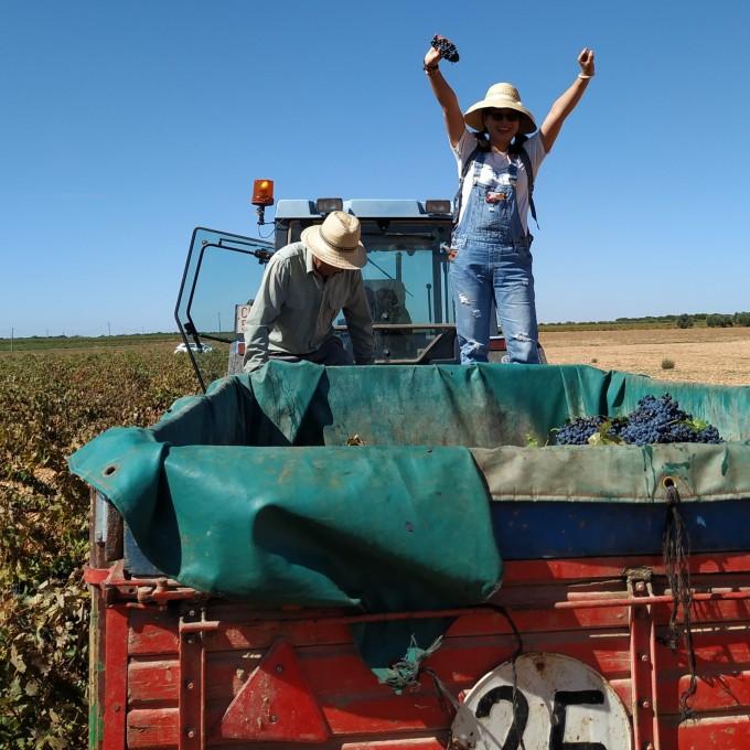 2019 vintage harvesting time!